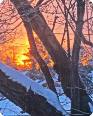 yard sunrise.jpg