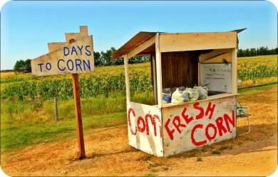 morden corn.jpg