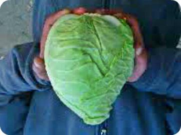 cabbage8.jpg
