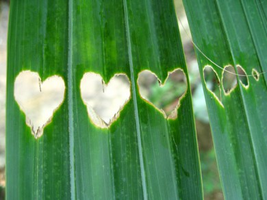 14-Lovely-Hearts-for-St-Valentines-day-palm
